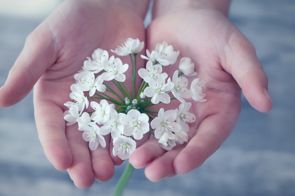 flower-flowers-small-flowers-white-161561.jpeg